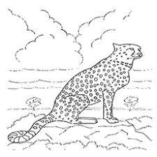 Cheetah coloring pages will appeal to boys and girls who love rare animals. 25 Best Cheetah Coloring Pages For Your Little Ones