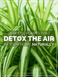 plants office garden green clean air indoor. 26 house plants that detox the air in your home naturally nasa researchers suggest efficient cleaning is accomplished with at least one plant per 100 office garden green clean indoor o