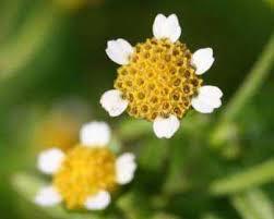 Assamese Flower Chart Flowers Names In Assamese Whatiscalled Com
