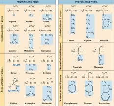 Universal Genetic Code Chart The Genetic Code Biology I