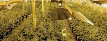 basement grow room design. Grow Room Requirements Budget Setup Basement Design Y
