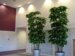 Small Decorative Trees For Home Ideas Decor Trends Regarding Decorative Plants For Home