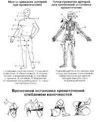 Первая помощь при кровотечениях Экстремальная медицина Статьи кровотечение