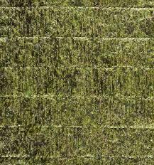 nori sheet nori edible seaweed sheet stock photo exopixel 29645117