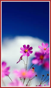 Flower Wallpaper For Android Phones ...