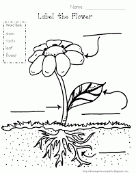 Small Picture Parts Of A Plant Coloring Page Coloring Home