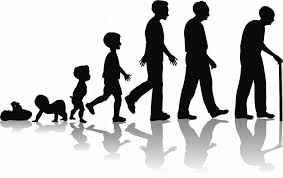 Image result for human life cycle