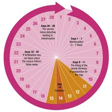 Great Sample Menstrual Calendar Images Gallery >> Period Calculator ...
