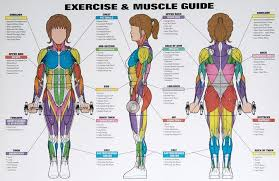 Best Exercises Targeting Each Muscle Group Workout Posters