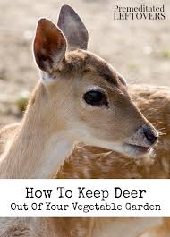 keep deer out of your vegetable garden