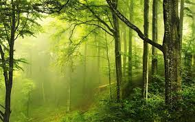 Green Forest Wallpapers - Full HD ...