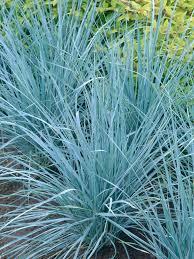 Tall Decorative Grass How To Landscape With Ornamental Grasses Hgtv