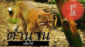 🔴สาบไพร : ตำนานเสือไฟ - YouTube