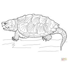 Small Picture Alligator Snapping Turtle coloring page Free Printable Coloring