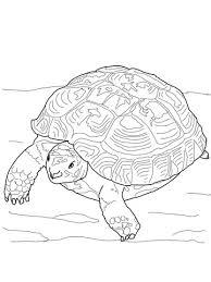 Schildpadden Kleurplaten Kleurplatenpaginanl Boordevol Coole