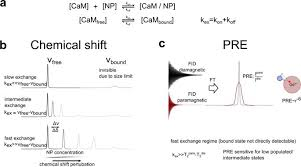 Luminescent And Paramagnetic Properties Of Nanoparticles Shed Light