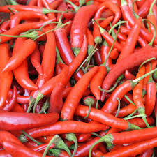 chili peppers.  Peppers Hot Pepper Adaptive Early Thai Grex Organic To Chili Peppers Y