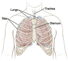 Stomach ribs lungs picture : Chest Wall Pain Costochondritis