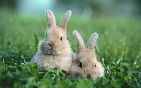 rabbits 1080p 2k 4k 5k hd wallpapers