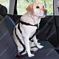 <b>Автомобильный ремень</b> безопасности для собак <b>Trixie</b>, 80-100 см