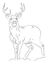 Small Picture Desert Bighorn Sheep Coloring page For the best adult coloring
