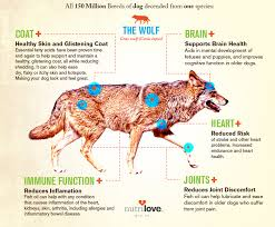 Fish Oil Dosage Chart Dog Does Your Dog Fish Top 6 Reasons For Fish Oil Supplements