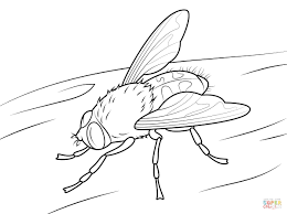 fly coloring pages free prepossessing fireflies