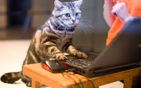 on the internet nobody knows you re a cat. Perfect The On The Internet Nobody Knows Youu0027re A Cat For The Internet Nobody Knows You Re A Cat