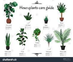 common indoor house plants sensational design mon house plant pests indoor plants houseplant flies