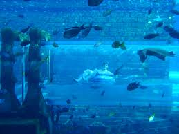 underwater water slide. This Is At Atlantis In The Bahamas Where You Float Through An Underwater Tube, Water Slide L