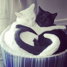Funny Photo of the day for Monday, 21 March 2016 from site Jokes of The Day  - Yin Yang Cats
