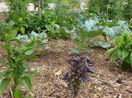 Small Picture Mini Food Forest in Denver Colorado A front yard edible garden