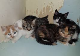 the five other cats that were found in the roof void of the sun hotel in