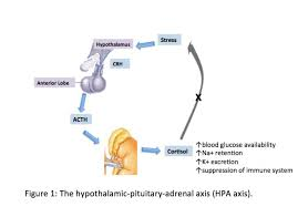 Hpa Axis Figure The Hypothalamic Pituitary Adrenal Hpa Axis Contributed