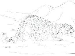 Leopard Coloring Pages Print Jokingartcom Leopard Coloring Pages