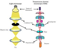 Tem Microscope Nptel Biotechnology Experimental Biotechnology