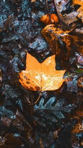 23++ Autumn Wallpaper Phone 4k - Venera ...