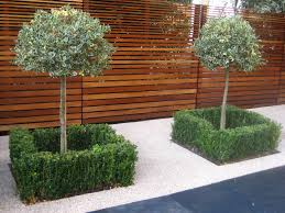 Small Picture Holly trees box hedges with slatted iroko fencing schmidt