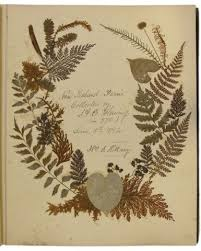 The frontispiece of Ida Fleming's album made in Dargarville in 1875.  Fleming is Sarah Hillary's Great-great-grandmother and her fern albu… |  Surreal art, Art, Ferns