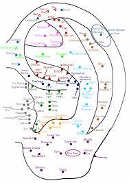 Chinese Ear Chart Acupuncture Ear Piercing Chart Www Bedowntowndaytona Com