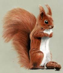 Small Picture Cute Squirrel Drawing with Colored Pencils by JasminaSusak on