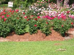Small Picture Best Of Rose Garden Design Ideas Perfect