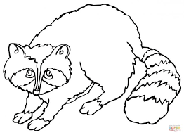 Small Picture Coloring Pages Animals Cute Raccoon Coloring Page Raccoon