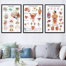 Us 1 98 27 Off Hd Wall Art Human Body Anatomy Poster Anatomie System Chart Body Map Canvas Painting Picture Print Decorative Home Decor In Painting
