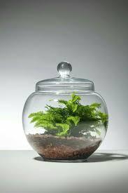 80 Awesome Bonsai Terrarium in the Jars Ideas