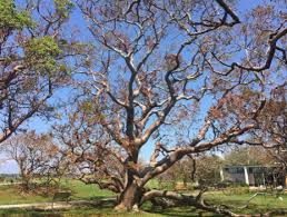 palm pine and oak trees all require different removal tactics which can affect the cost of removing them palms have teeth involve use ropes tree cutting prices i79