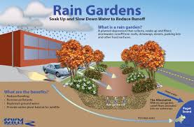 Small Picture 12000 Rain Gardens Reducing Stormwater Pollution in Puget Sound