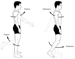 Anatomical Terms Of Movement Flexion Rotation
