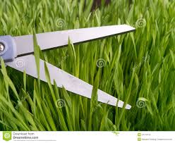 attention to detail cutting grass stock photography image attention to detail cutting grass