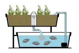 aquaponic gardening. aquaponics gardening aquaponic a
